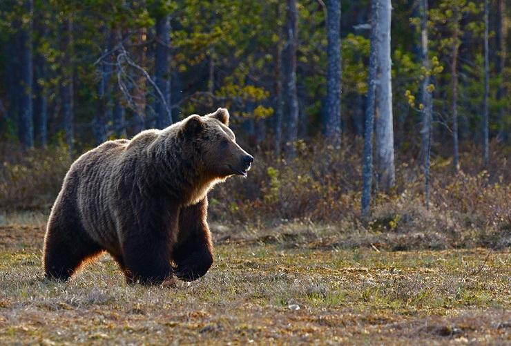 Was ist der Bärenmarkt?